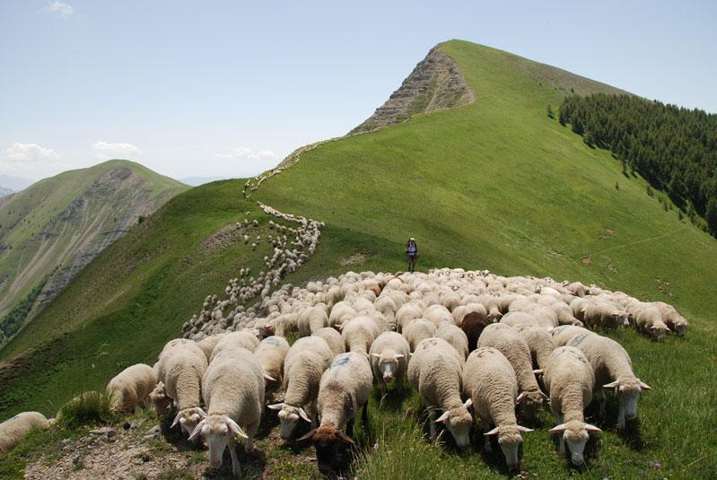 Agriculture gites de france des alpes le portail - Chambre d agriculture des hautes alpes ...